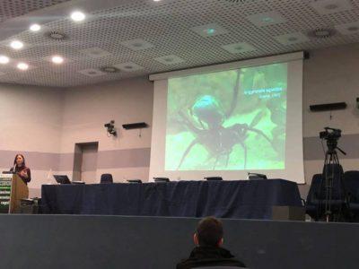 il-fascino-nascosto-ragni-pisa