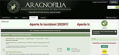 Il forum di Aracnofilia