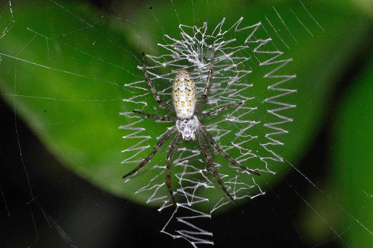 Habitus di un esemplare giovane