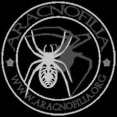 Logo dell'Associazione italiana di aracnologia