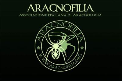 aracnofilia la nostra associazione evidenza